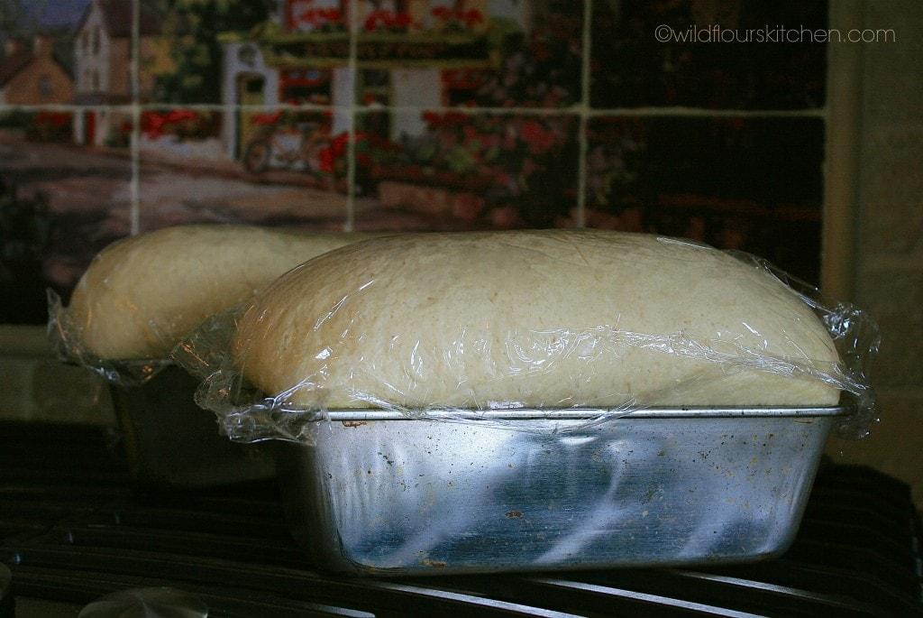 bread risen in pan